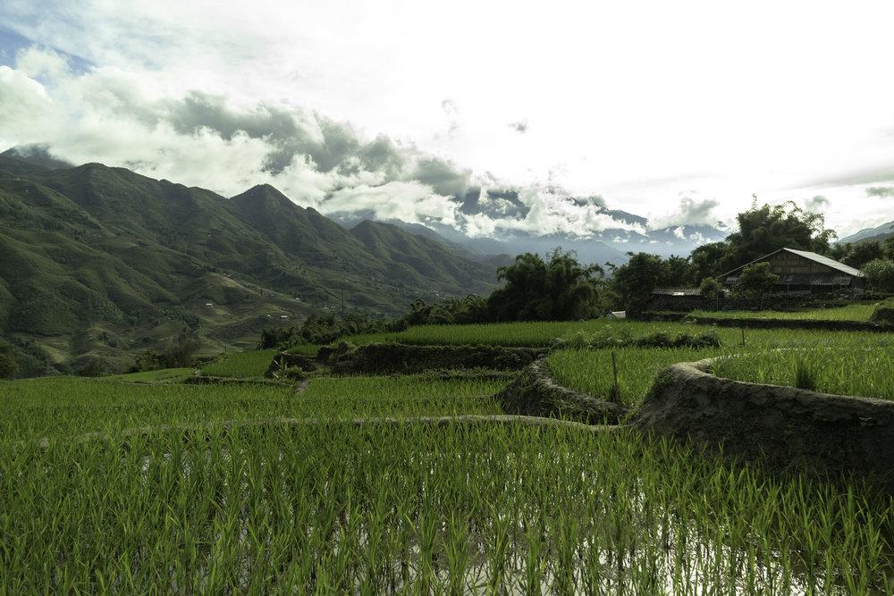 Fields-of-rice-SaPa-Vietnam.jpg