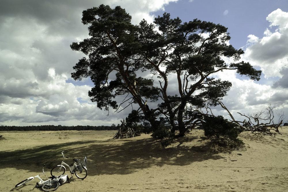 Middle-of-the-desert-Netherlands.jpg