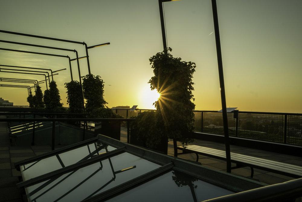 Rotterdam-sunset-tree-glare.jpg
