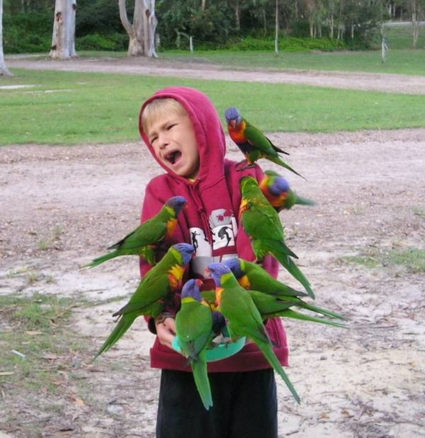 Source: http://www.funnyloves.com/many-parrots-fun-with-boy-funny-situations/