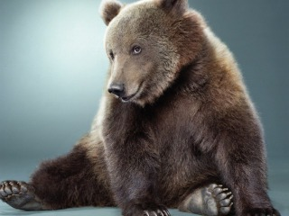 Source: http://petslady.com/articles/get_ready_hibernate_these_12_beautiful_bear_wallpapers_64772
