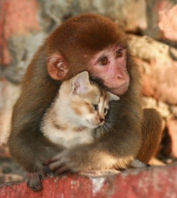 Source: http://www.animals-photos.net/wp-content/uploads/2011/12/kitten-and-monkey-love.jpg