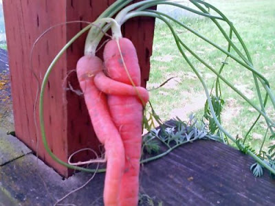 Source: http://joannecasey.blogspot.com/2011/09/carrot-love.html