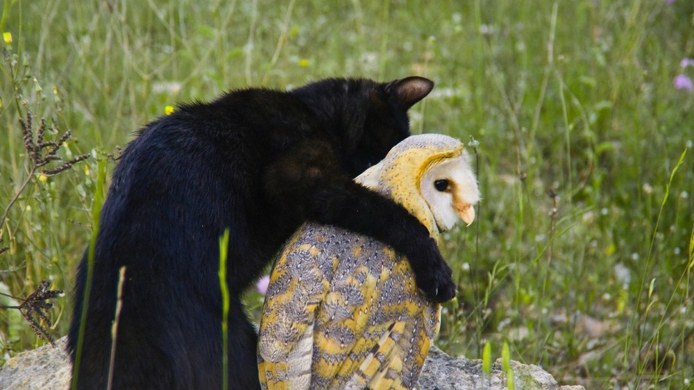 Fum the cat & Chebra the barn owl: http://on.natgeo.com/1IHoqGx