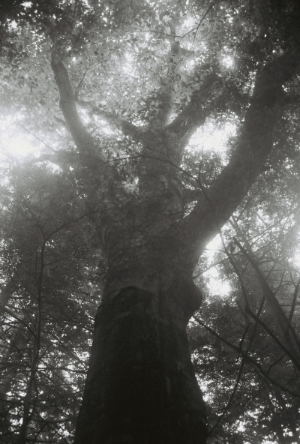 Photo Big Tree.jpg