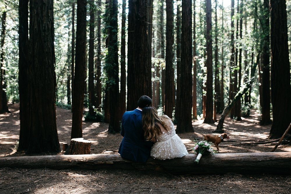 Redwoods elopement // muir woods elopement photographer