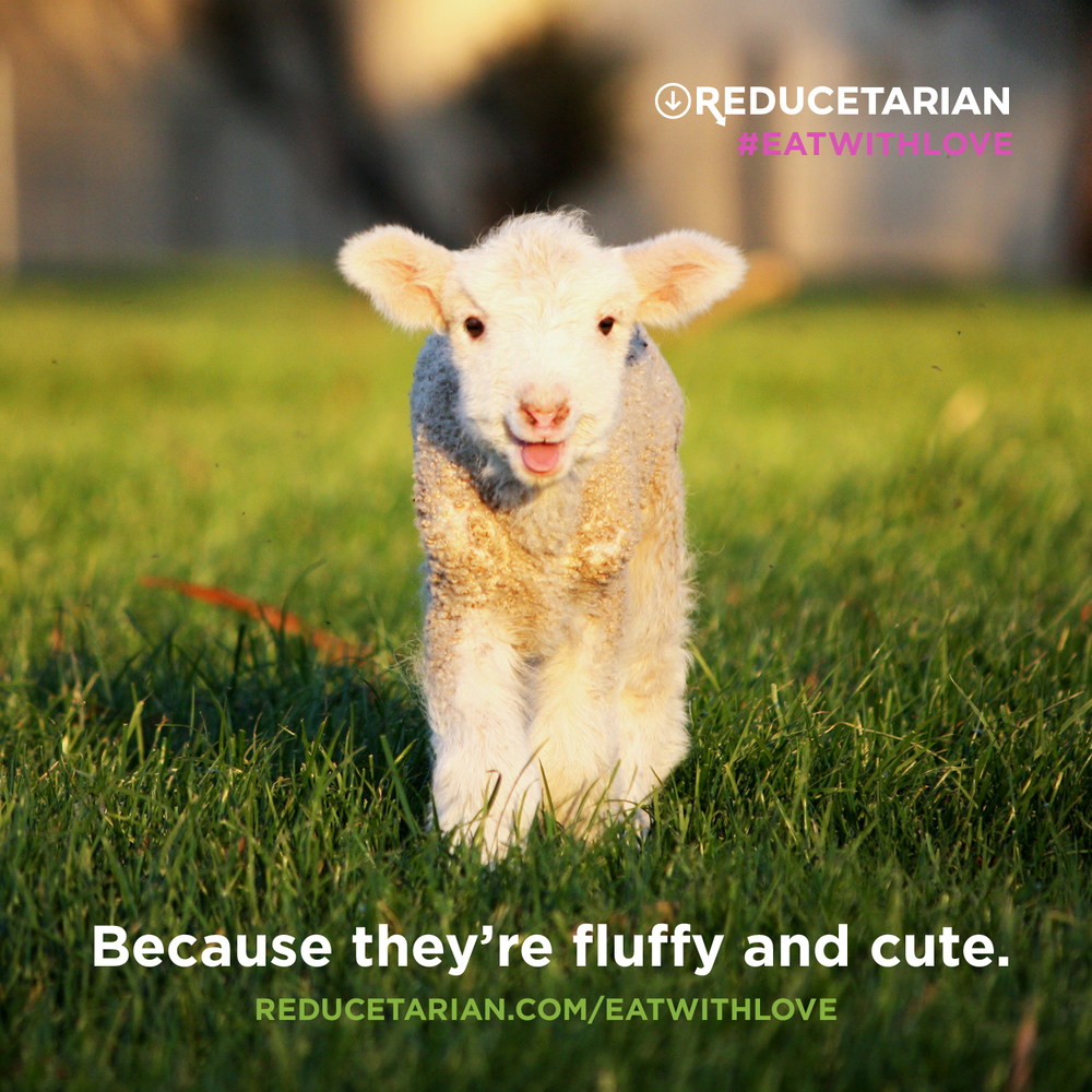 Because they're fluffy and cute.