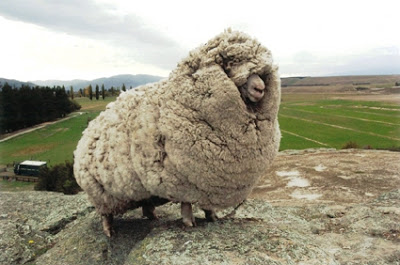 Shrek the Sheep.png