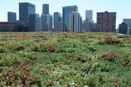 EPA-green-roof.jpg