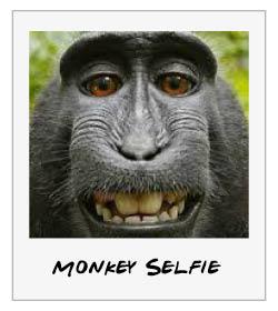 monkeyselfie.jpg