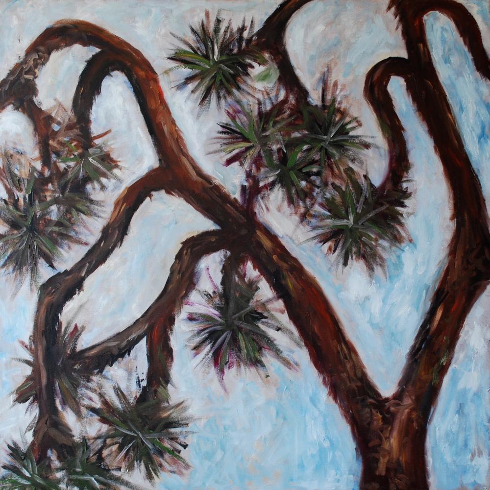 """joshua tree, oil, 36""""x36"""","""