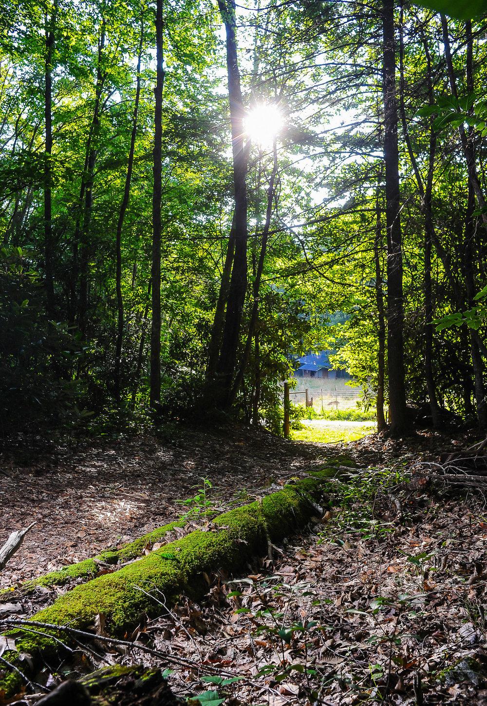 Hiking 2.jpg