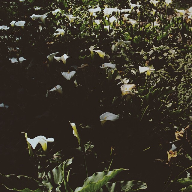 Vacation is around the corner and I can't wait to take a break and smell the flowers.  #vsco #vscocam #mextures