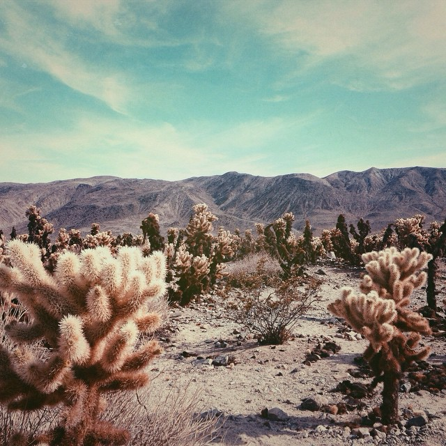 Where did all the cowboys go? #vscocam #vsco #mextures