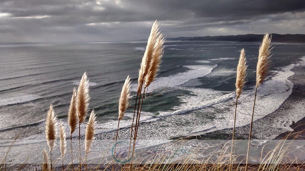 Raglan-Beach-LupinBay.jpg