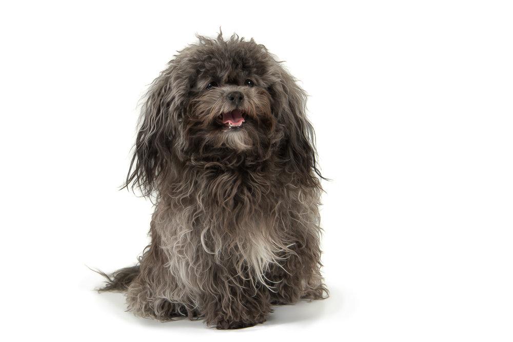 LupinBay_Dog-SK4558.jpg