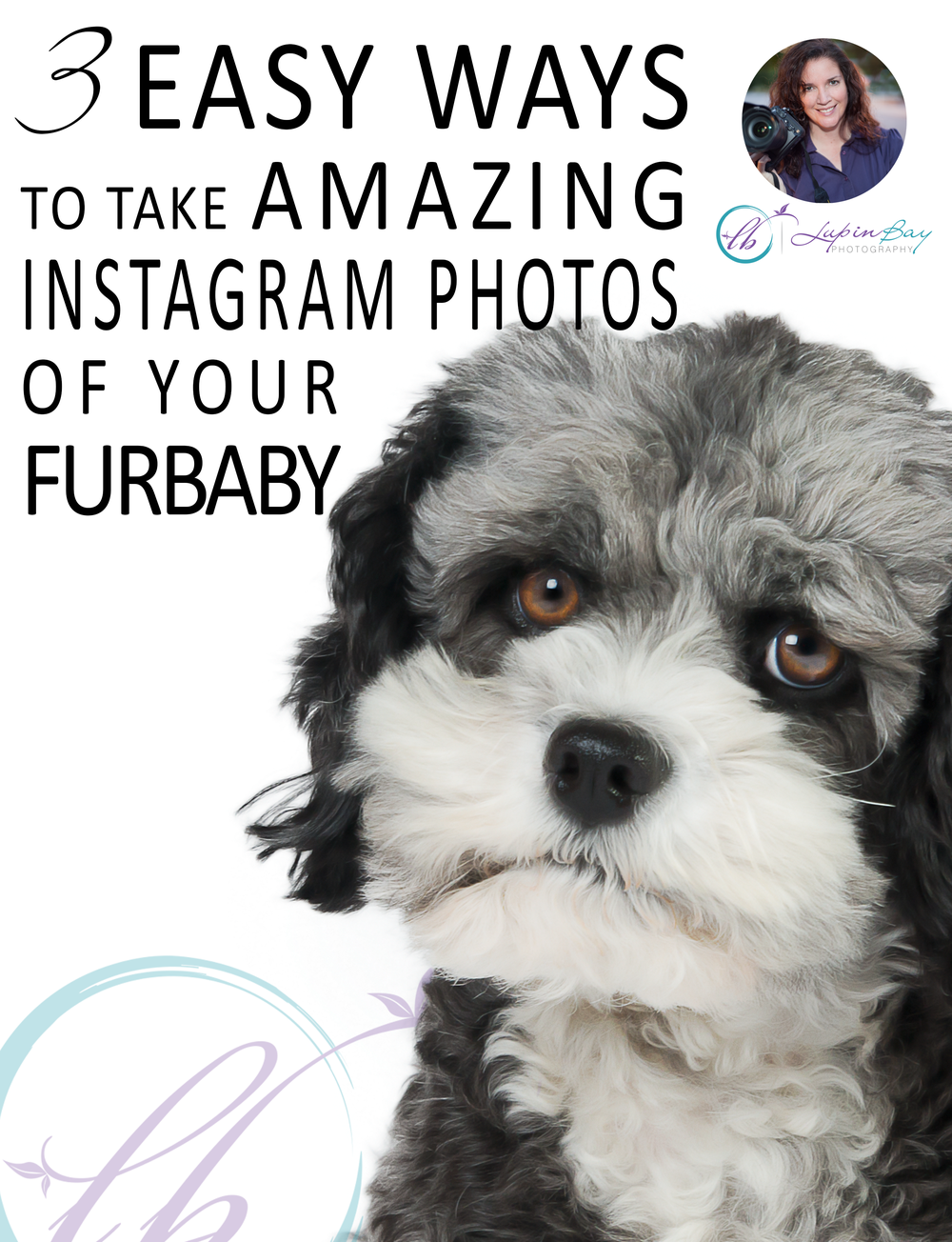 3 Easy Ways to take Amazing Instagram Photos of Your Pet