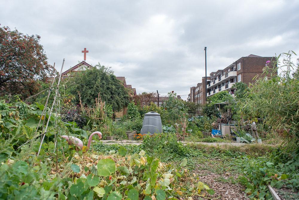 Vauxhall City Farm_16.jpg