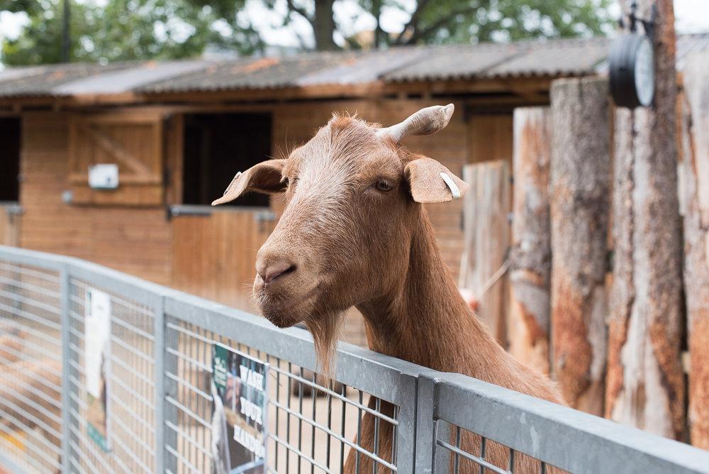 Vauxhall City Farm_18.jpg