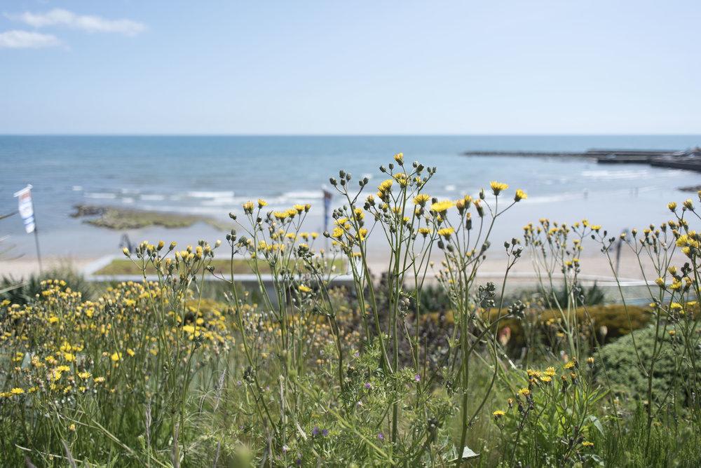 Lyme Regis_2.jpg