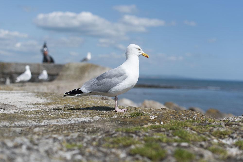 Lyme Regis_6.jpg