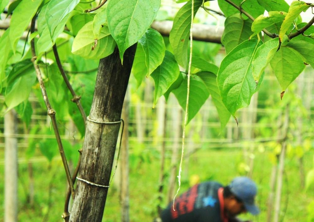 Eco-Plantacao