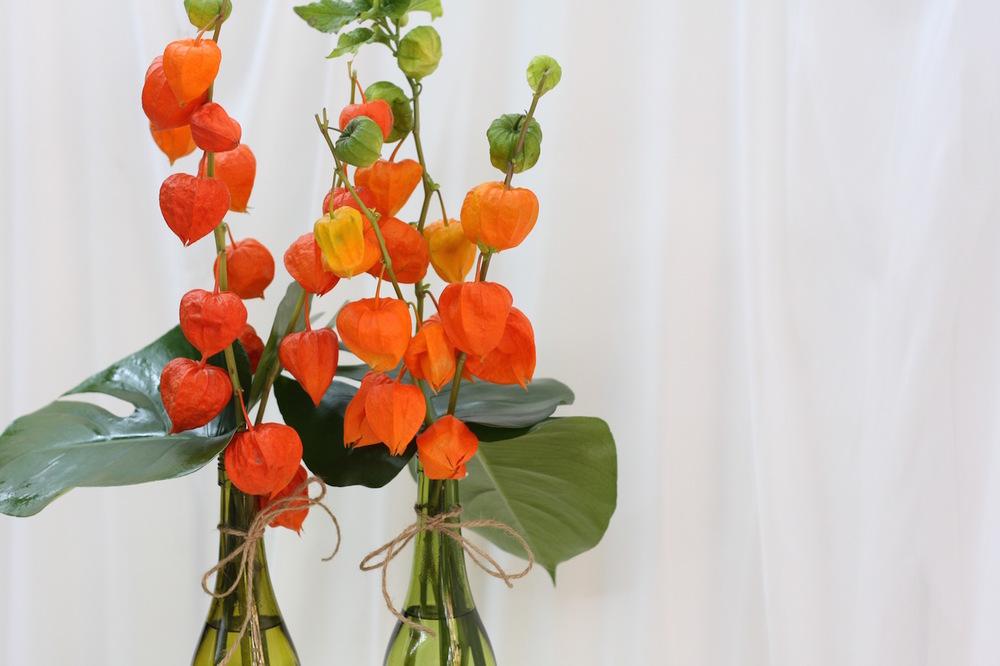 Blossom Buddy 1.jpg