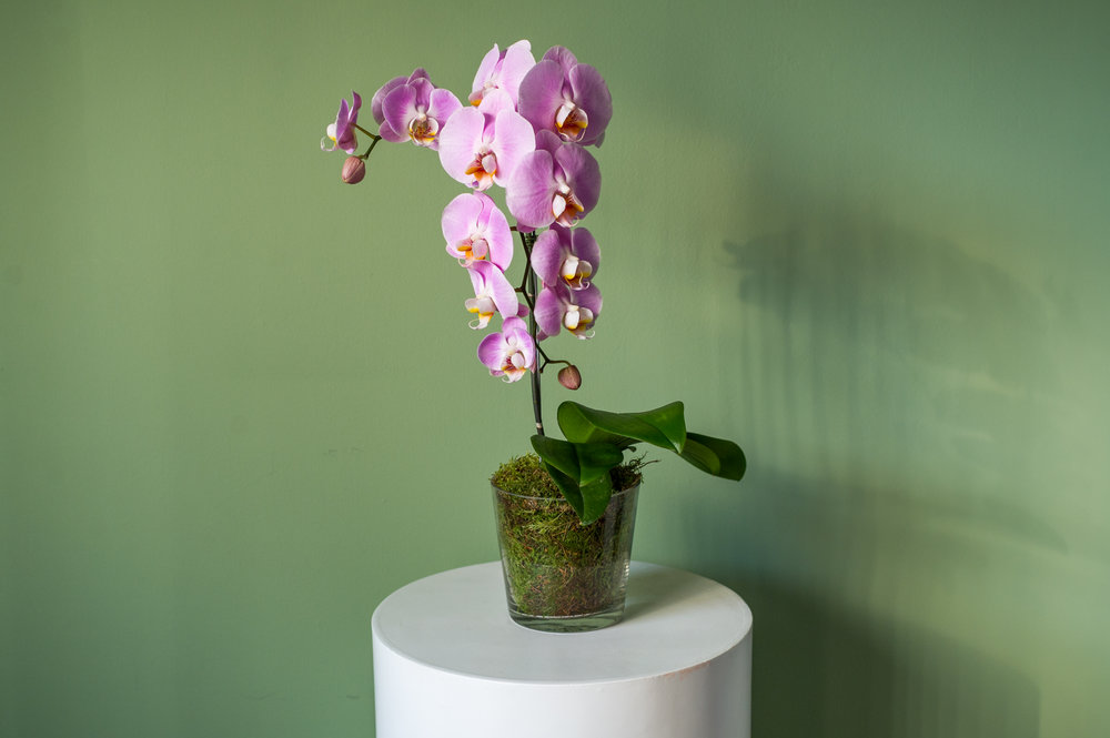 Caring For Your Orchid Friend A Beginners Guide Singapore Flower