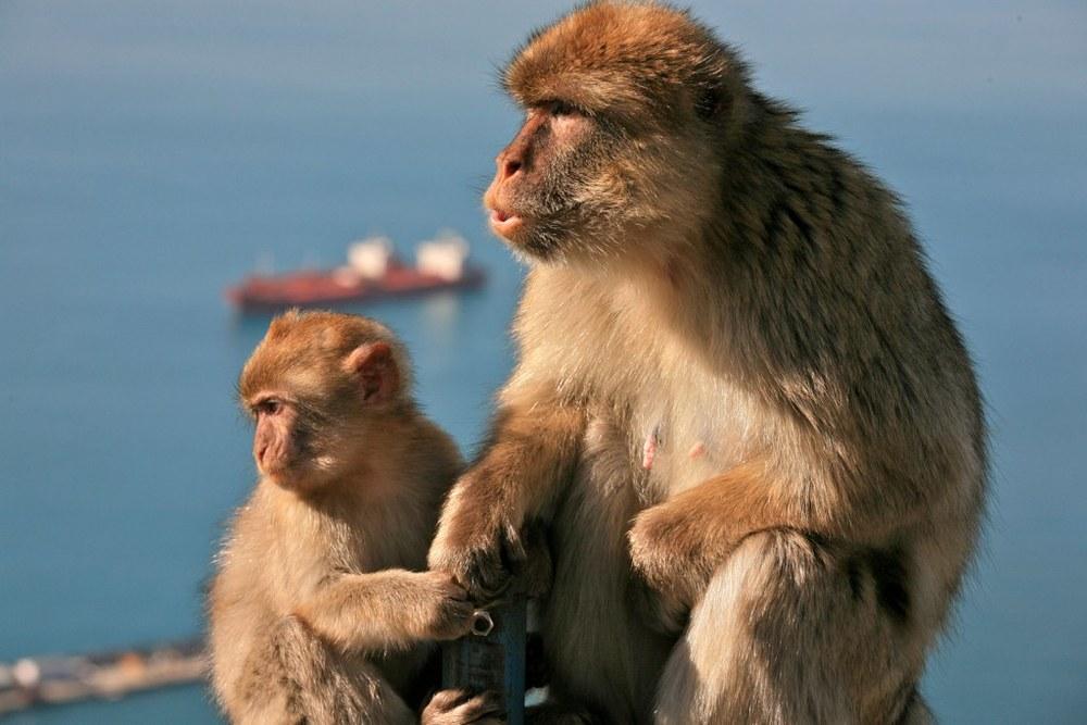 Evolutionäre Reaktionsmuster spielen beim Schwitzen eine immens große Rolle