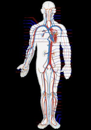 Biofeedback und Hyperhidrose: Was dein Herz mit deiner Hyperhidrose ...