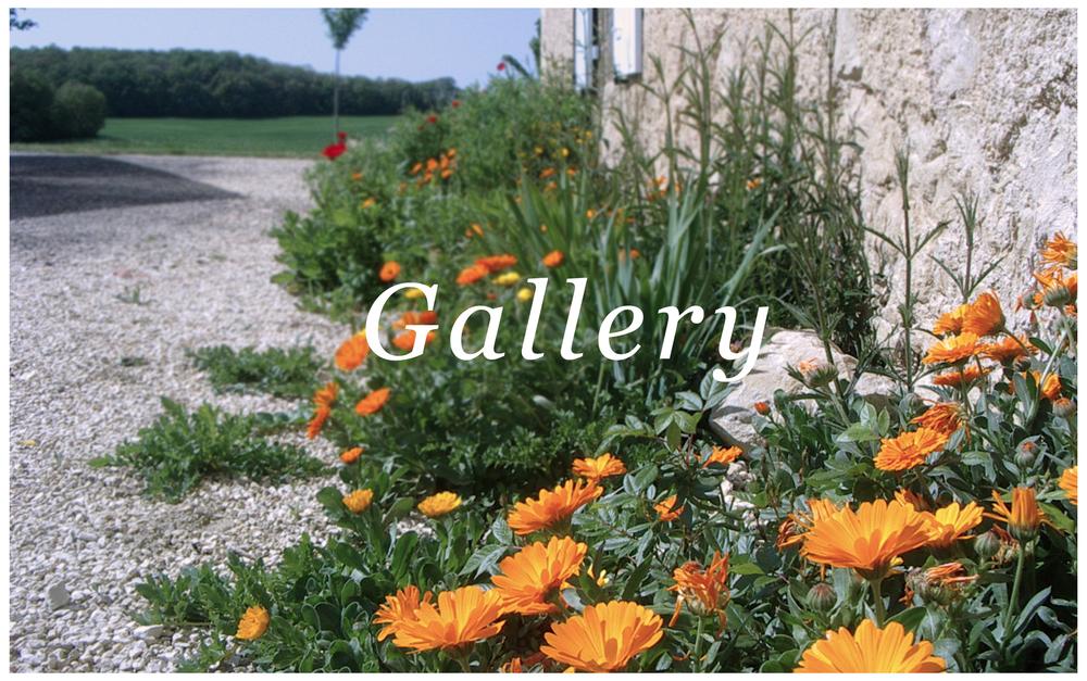gallery.thumb.jpg