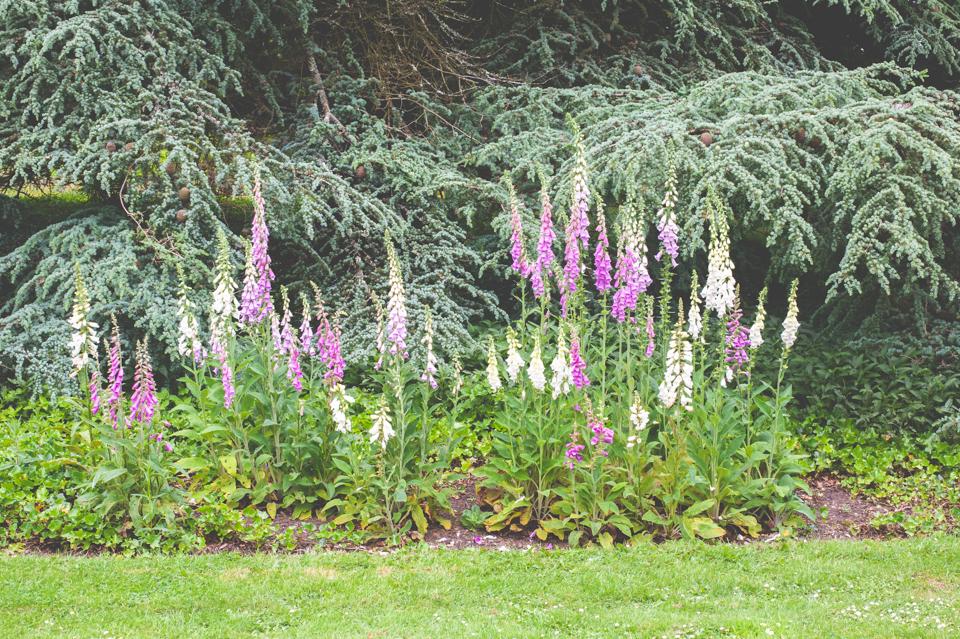 West Dean Gardens-3.jpg