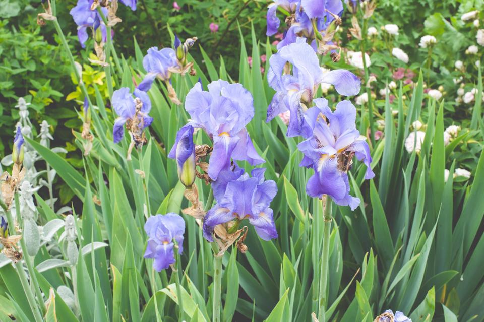 West Dean Gardens-6.jpg