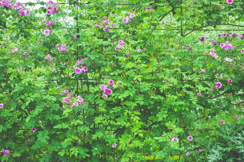 West Dean Gardens-10.jpg