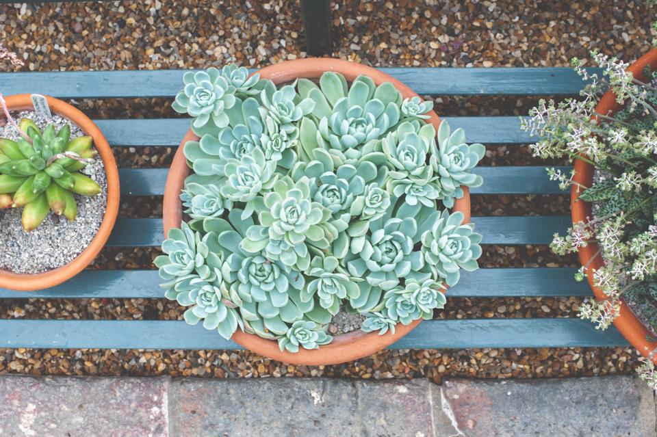 West Dean Gardens-24.jpg
