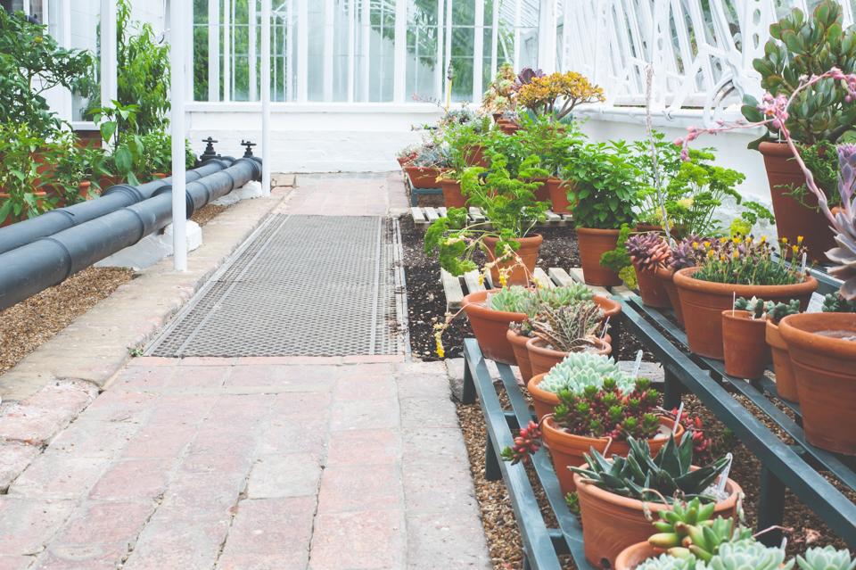 West Dean Gardens-26.jpg