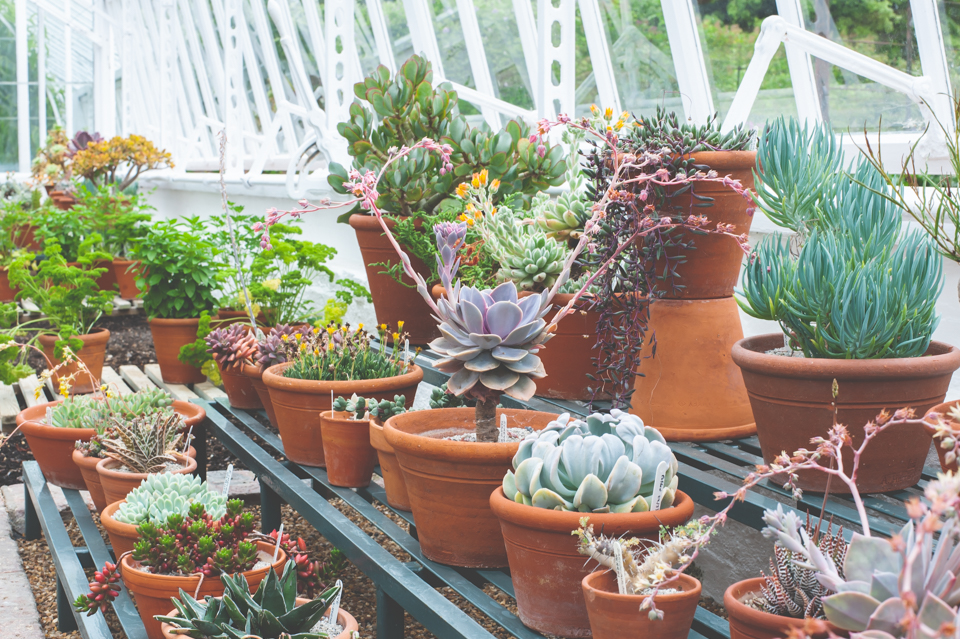 West Dean Gardens-27.jpg