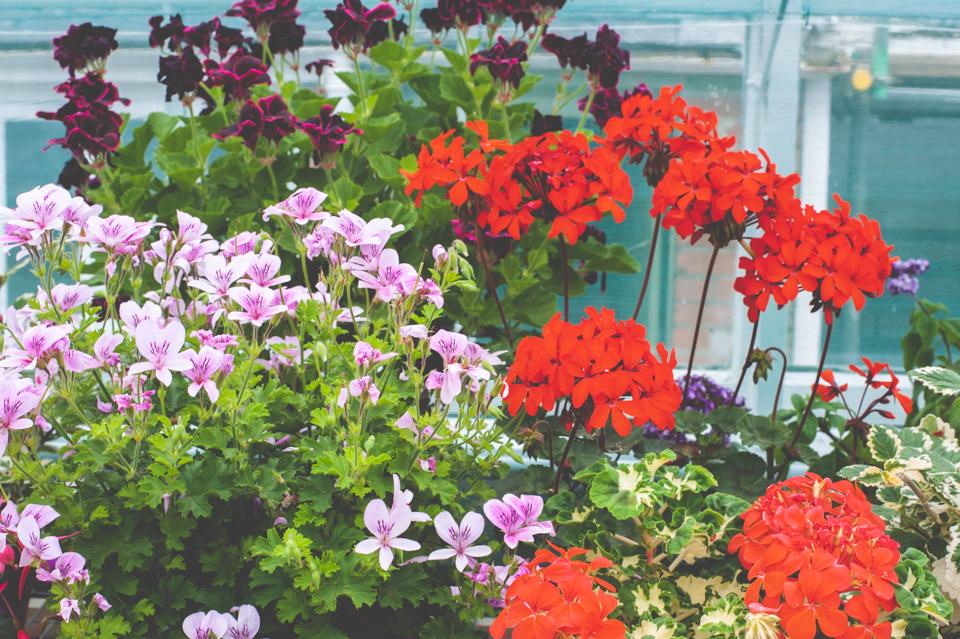 West Dean Gardens-44.jpg