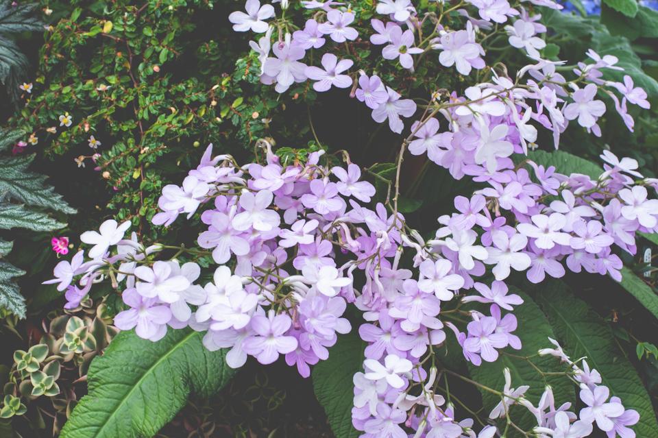 West Dean Gardens-57.jpg