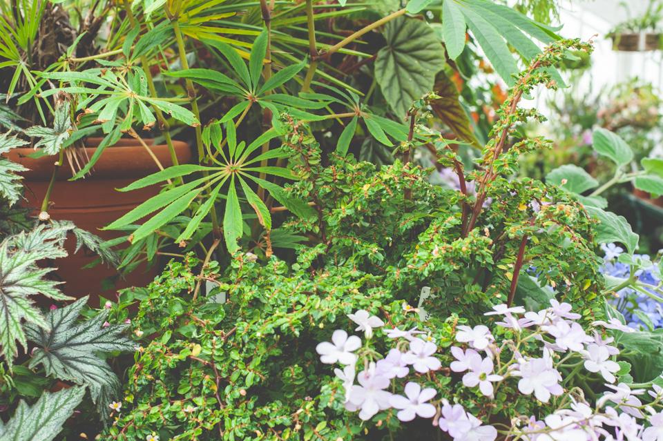 West Dean Gardens-58.jpg