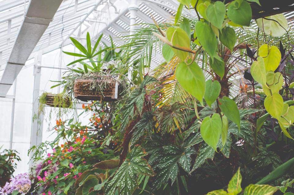 West Dean Gardens-59.jpg