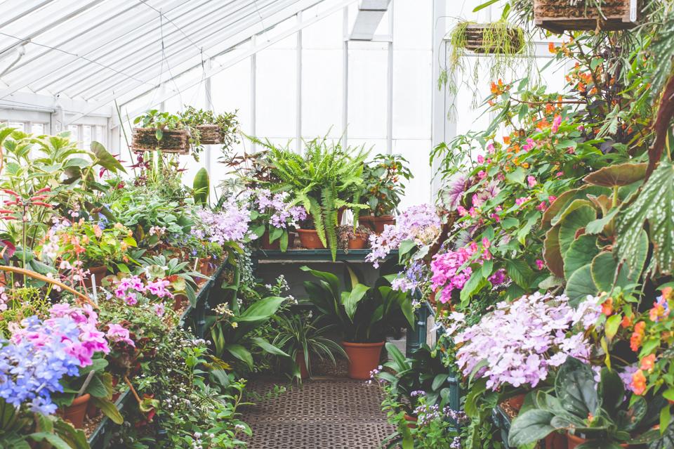 West Dean Gardens-60.jpg