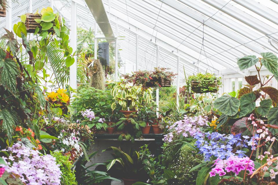 West Dean Gardens-62.jpg
