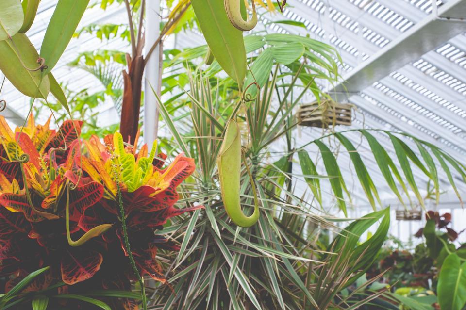 West Dean Gardens-76.jpg