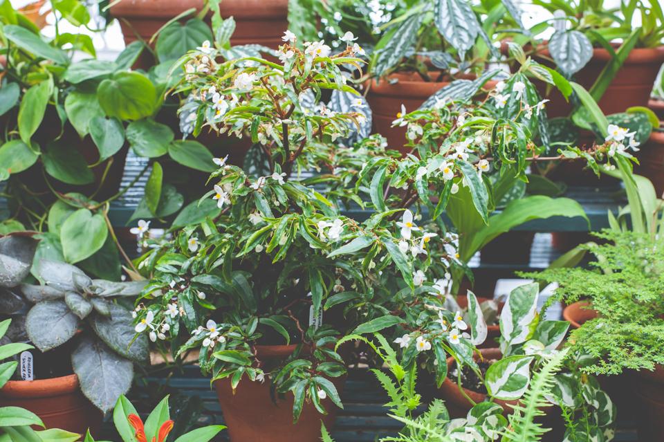 West Dean Gardens-94.jpg