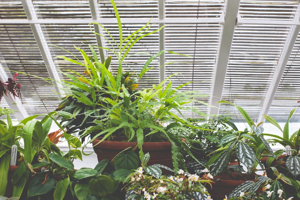 West Dean Gardens-95.jpg