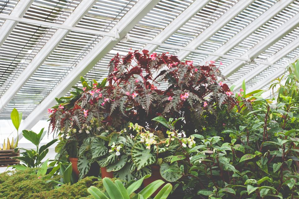 West Dean Gardens-98.jpg