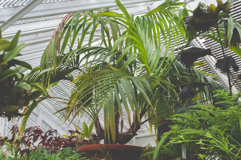 West Dean Gardens-101.jpg