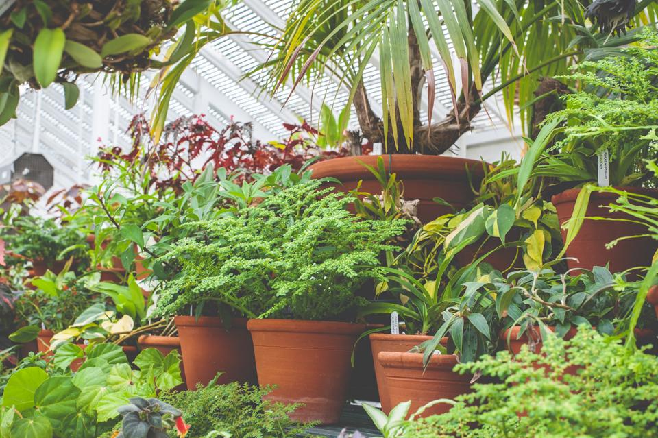 West Dean Gardens-102.jpg