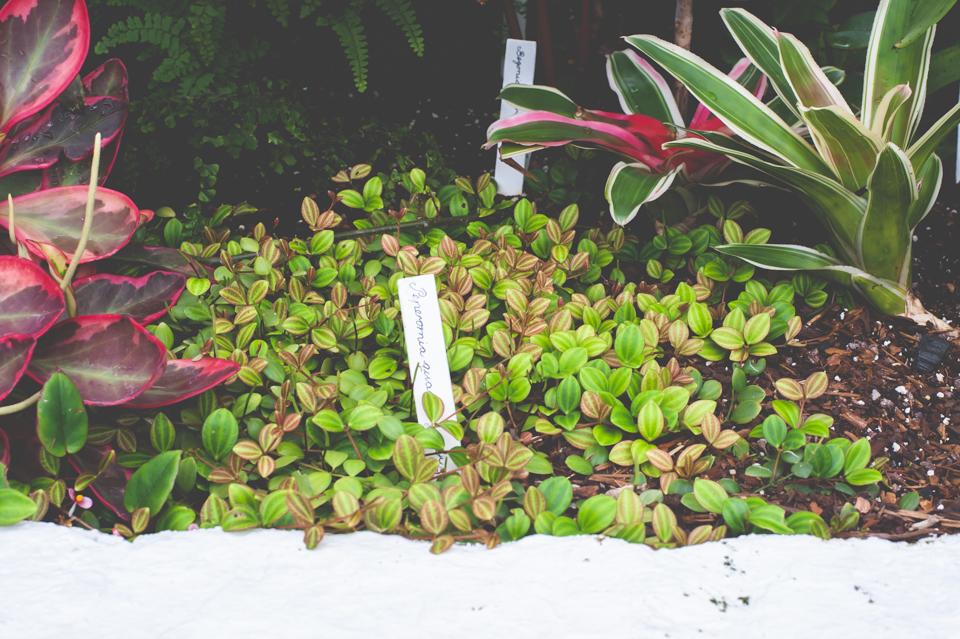 West Dean Gardens-104.jpg